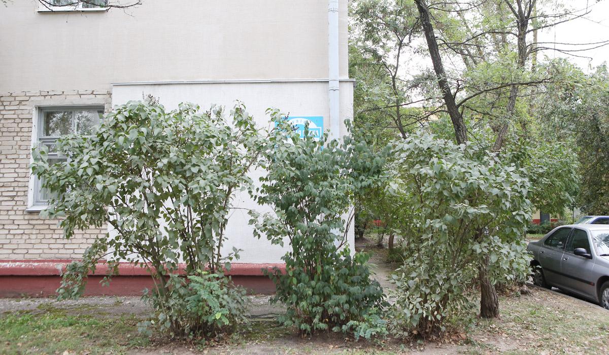 указатель адреса в кустах