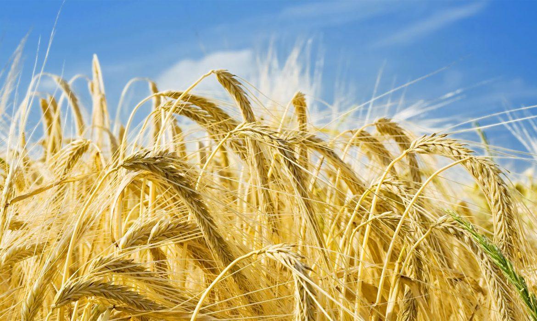 сельское хозяйства, уборка урожая