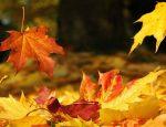 осень, желтые листья